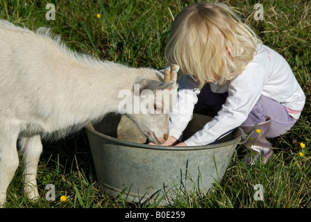 Stock photo of a blond haired two year old girl helping to feed a Goat - Stock Photo