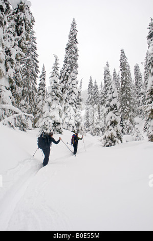 Two backcountry skiers s skinning in the backcountry Selkirk Mountains British Columbia Canada - Stock Photo
