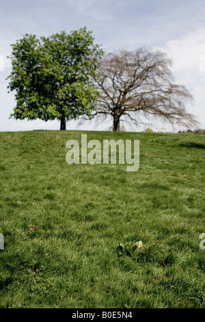 Two trees on Hampstead Heath - Stock Photo