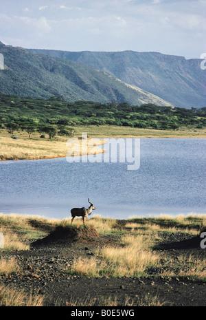Greater Kudu antelope on termite mound near shore of Lake Bogoria Great Rift Valley Kenya East Africa - Stock Photo