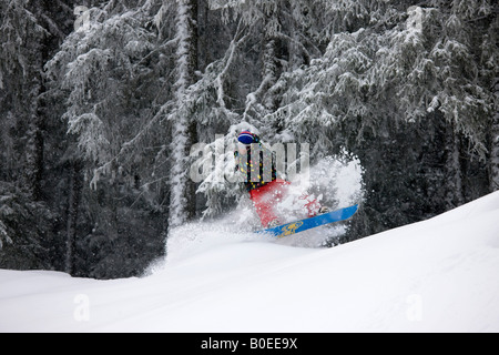 Jo Howard slashes the powder snow off piste in the trees - Stock Photo