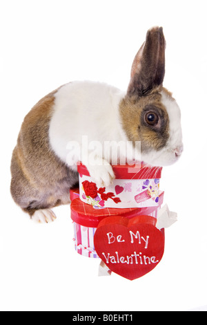 happy valentines day bunny rabbit with pink hearts and scrolls, Ideas