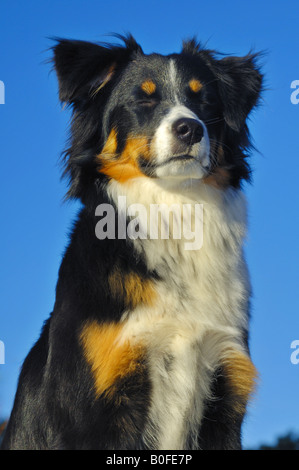 Bridport Dog One Eye