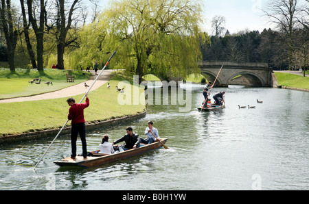 Two punts full of students make their way through the geese along the river Cam, Cambridge, ERngland - Stock Photo