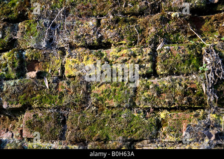 An old moss covered clay brick and flintstone wall in Medmenham, Buckinghamshire, England - Stock Photo