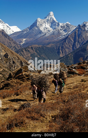 Women carrying bundles of firewood, snow covered mountain peaks at back, Sagarmatha National Park, UNESCO World - Stock Photo
