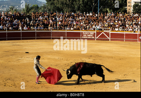 Bullfighter holding red cape in front of a bloodied black bull during a bullfight at the Plaza de Toros von Calpe - Stock Photo