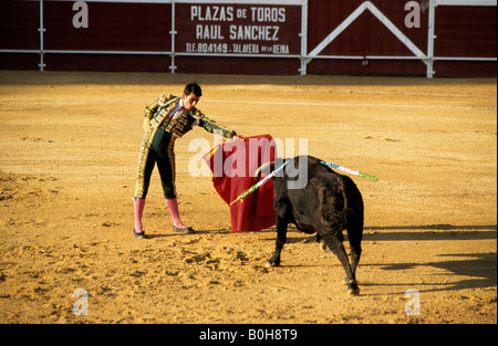 Bullfighter holding his red cape in front of a bloodied black bull during a bullfight at the Plaza de Toros von - Stock Photo