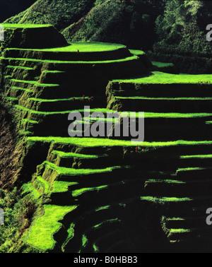 Rice terraces, Banaue, Ifugao Province, Luzon, Philippines - Stock Photo