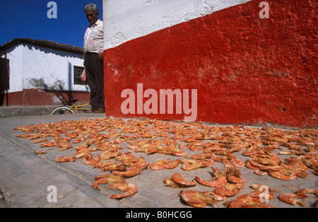 Camarones, crabs laid out to dry, Mexcaltitan Island, Nayarit, Mexico - Stock Photo