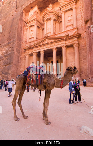 Camel standing in front of the Khazne al Firaun, Al Khazneh treasury building, Petra, Jordan, Middle East - Stock Photo
