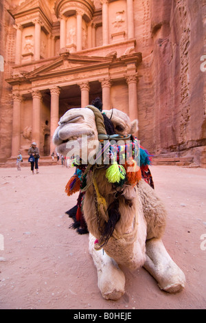 Camel lying and ruminating in front of the Khazne al Firaun, Al Khazneh treasury building, Petra, Jordan, Middle - Stock Photo