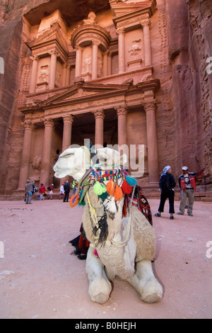 Camel lying in front of the Khazne al Firaun, Al Khazneh treasury building, Petra, Jordan, Middle East - Stock Photo