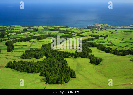 Typical Azores islands landscape with green pastures and japanese cedar woods Cryptomeria japonica - Stock Photo