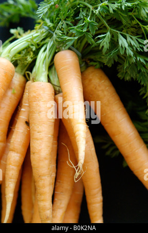 A bunch of organic carrots - Stock Photo