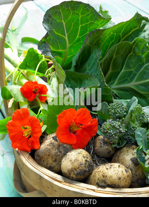 Garden trug.Basket filled with Cabbage,Potatoes ,Purple Sprouting Broccoli,Leeks Nasturtium flowers on distressed - Stock Photo