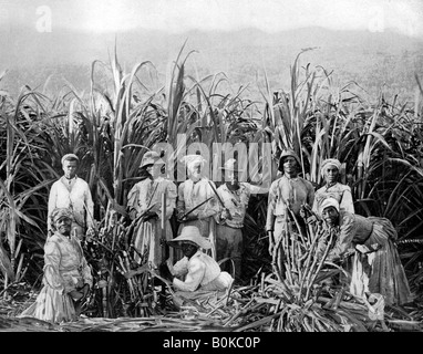 Sugar cane cutters, Jamaica, c1905.Artist: Adolphe Duperly & Son - Stock Photo
