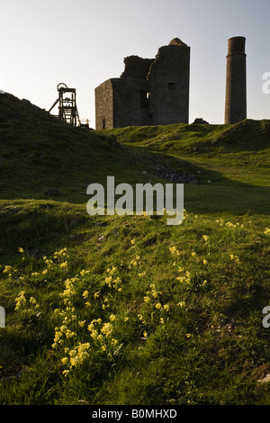 Cowslips growing at Magpie Mine (disused lead mine) near Sheldon, Peak District National Park, Derbyshire, England - Stock Photo