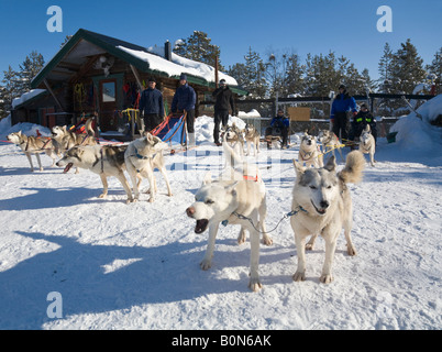 Four dogsledges with siberian huskies waiting for the start of a trip in winterly Lapland / northern Sweden - Stock Photo