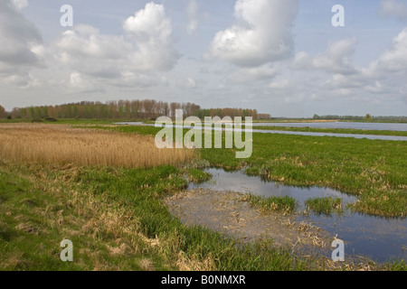 Freshwater marsh, flood and reedbed at Lakenheath Fen RSPB reserve, Suffolk. - Stock Photo