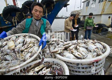 Dockworker unloads fresh crabs at harbor side fish market, Zhoushan City, Zhoushan Archipelago, Zhejiang Province, - Stock Photo