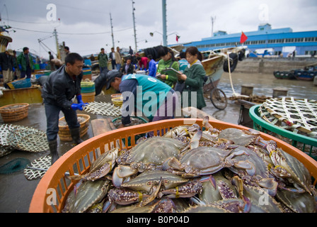 workers buy and sell fresh seafood and fish at auction in
