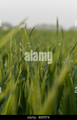 morning dew on leaves - Stock Photo