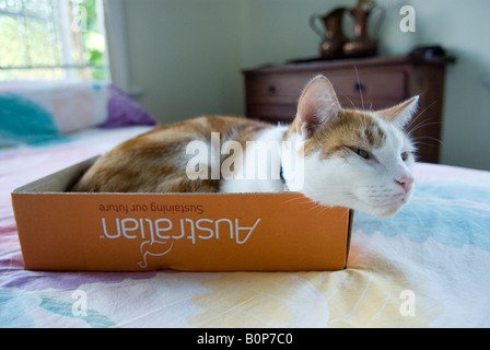 Cat curled up in cardboard box on bed - Stock Photo