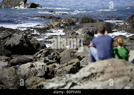 Tourists watching wild seals on the rocks at Kaikoura - Stock Photo