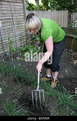 Female woman gardening digging up vegetable patch and planting new vegetables in the back garden - Stock Photo