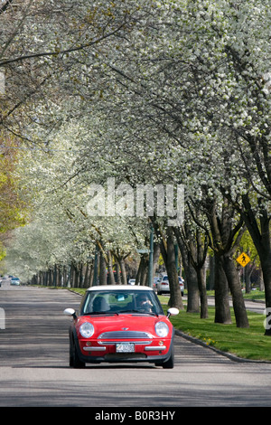 Car traveling on Harrison Boulevard lined with pear trees in bloom in Boise Idaho - Stock Photo
