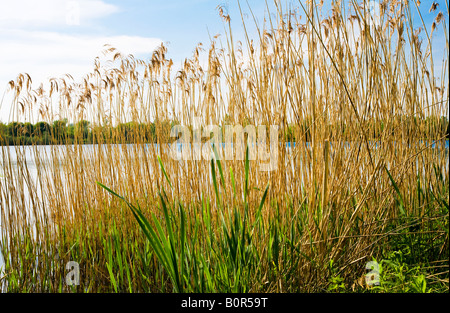 Mill Lake, a nature reserve in the Cotswold Water Park, Gloucestershire, England, UK - Stock Photo