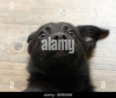 dog portrait with odd ears - Stock Photo