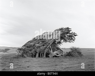 This image dramatically illustrates the strong winds which buffet the Catlins in South Island New Zealand. - Stock Photo