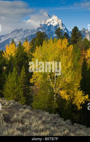 Aspen trees in autumn morning forest below the Grand Teton mountain Grand Teton National Park Wyoming - Stock Photo