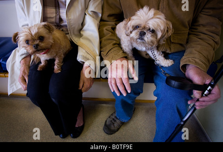 Two dogs sit on there owners laps in a veterinary clinic waiting room. Picture by James Boardman - Stock Photo