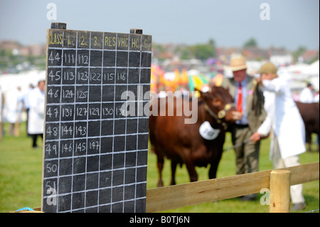 Heathfield & District Agricultural Show. Crowds flock to the county show held in May. Judging of cattle in progress - Stock Photo