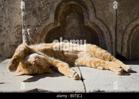 A Ginger Cat stretching and basking in the warm sun outside the Cultural Museum or Rectors Palace, Dubrovnik, Croatia - Stock Photo