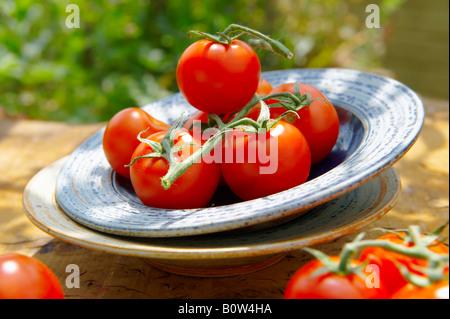 Fresh organic tomatoes on the vine - Stock Photo