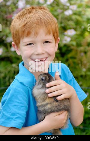 Little boy holding a European Rabbit (Oryctolagus cuniculus) - Stock Photo