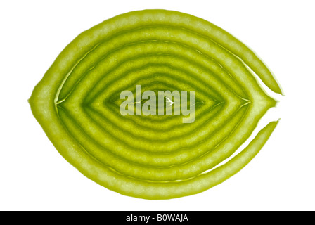 Cross-section of a leek, cutout - Stock Photo