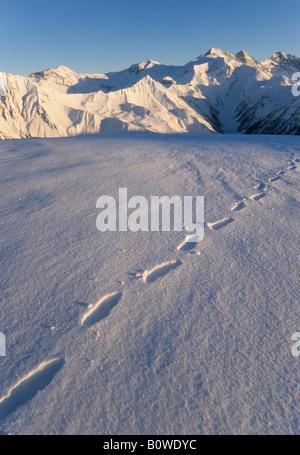 Tracks in the snow, Tux Alps, Tyrol, Austria, Europe - Stock Photo
