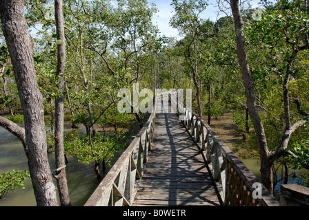 Wooden walkway through mangrove forest, Bako National Park, Sarawak, Borneo, Malaysia, Southeast Asia - Stock Photo