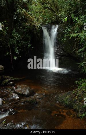 brook clouded forest bromeliacee epiphitic plants stream Cerro de la Muerte Costarica rain forest foresta pluviale tropicale for Stock Photo