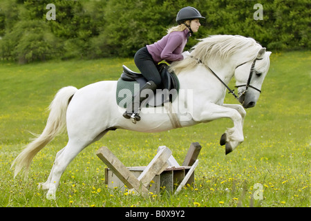 Young rider on Connemara pony stallion - jumping - Stock Photo
