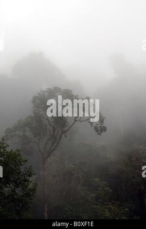 Costarica rain forest foresta pluviale foresta tropicale foresta tropicale montana paesaggio Stock Photo