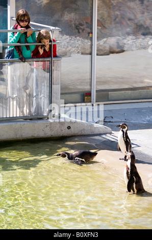 Girls watching penguins in the pool Zoo garden in Slotskogen a park in Gothenburg Sweden - Stock Photo