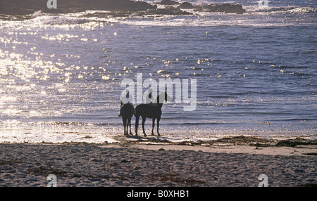 Two horsewomen ride along the beautiful shore on the 17 Mile Drive Seventeen mile drive near Carmel and Pebble Beach - Stock Photo