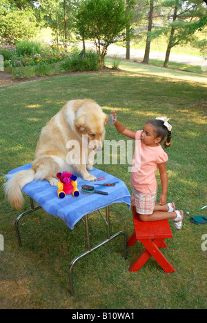 Young girl grooming Golden Retriever - Stock Photo