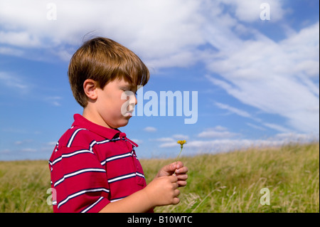 A young boy in a red shirt looking at a flower he s picked in a meadow on a bright sunny day - Stock Photo